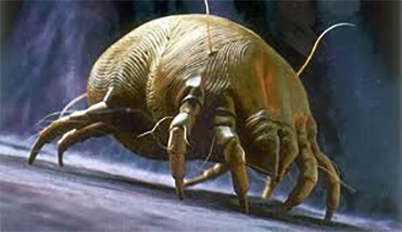 Bedding can contain dust mites