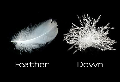There is a difference between down and feather